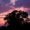 Pink and Purple Sunset