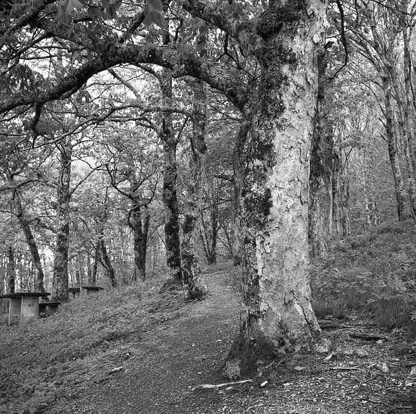 Craggy Gardens Picnic Area #3
