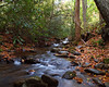 A photograph of the Ivy River in the Big Ivy Forest in Pisgah National Forest during autumn.