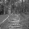 Craggy Gardens Picnic Area #1