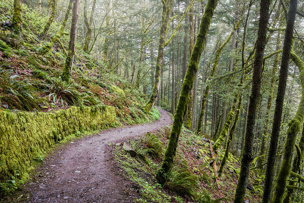 Horstail Falls trail along the Columbia River Gorge in Oregon.  © 2013 Nicole S. Young