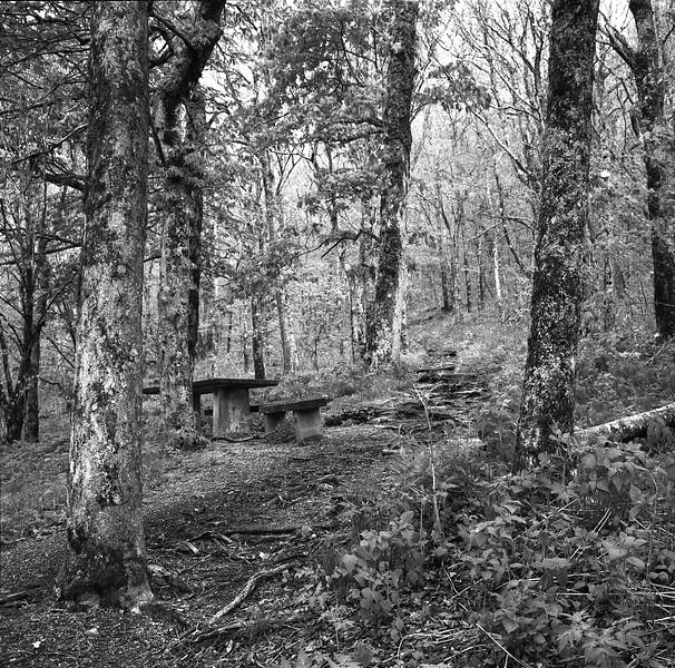 Craggy Gardens Picnic Area #4