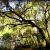 In Savannah's Wildlife Refuge