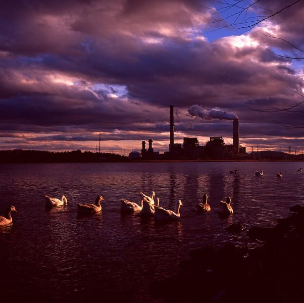 Sunset at Lake Julian with Geese