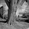Trinity Episcopal Tree No. 2