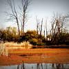 Brick Ponds, Augusta Ga