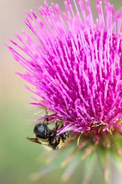 Bee-flection