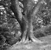 A tree on the Blue Ridge Parkway at Chestnut Cove. Taken with Fujifilm Neopan Acros 100 film on a Mamiya 6 medium format camera.