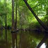 The Creek
