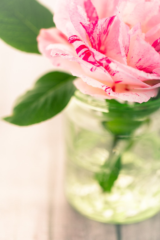 """Garden Rose""  © 2013 - Nicole S. Young"