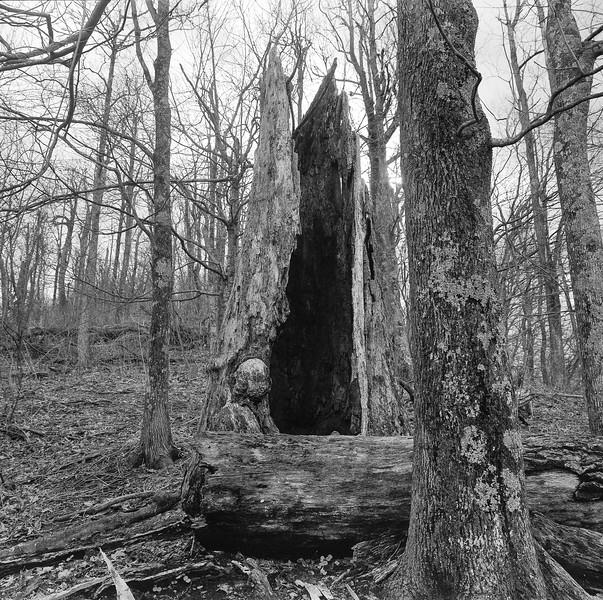 Big Ridge Overlook Tree No. 2