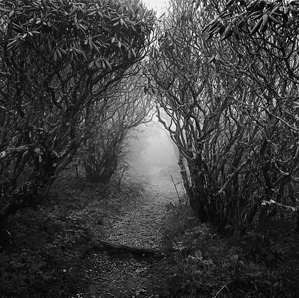 Foggy Craggy Gardens