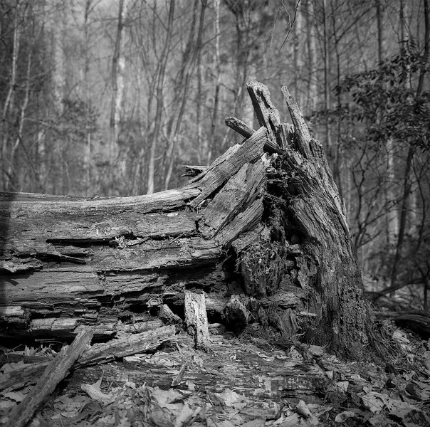 Rattlesnake Lodge Trail-Fallen Tree No. 1