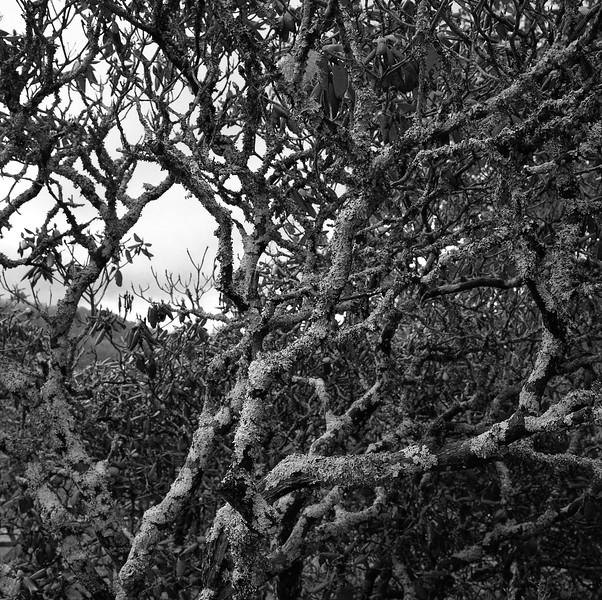 Craggy Gardens Picnic Area #11