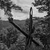 The Needle Tree No. 8