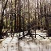 Lover's Lane Swamp, Augusta, Ga
