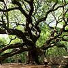 Angel Oak, Charleston SC
