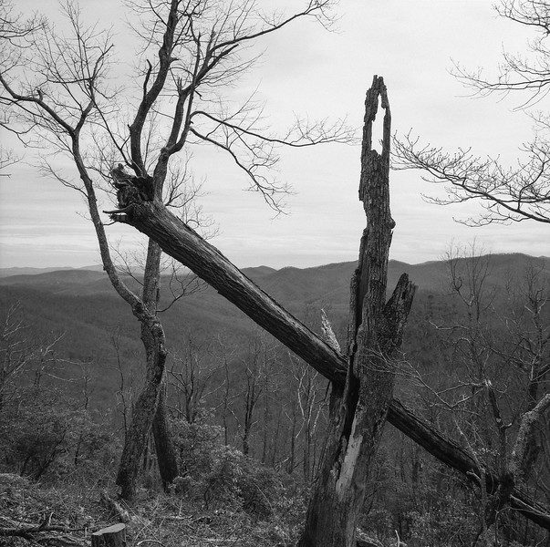 Blue Ridge Parkway Totem Trees No. 1