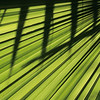 Palmblatt, palm leave, Schatten, shadow, Baja California, Mexiko, Mexico