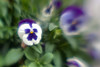 Created using the Lensbaby Composer Pro with Single Glass optic.