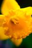 1201_Bellingrath Gardens_0091_7_9