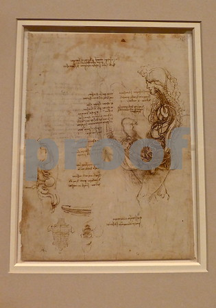 Leonardo Da Vinci's Anatomical Drawings at The Queen's Gallery, Buckingham Palace