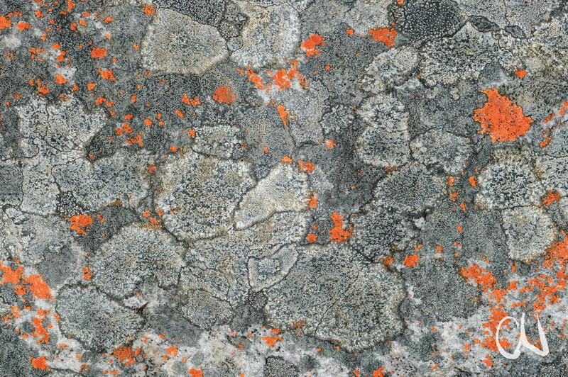 Flechten, Fels, De Hoop Nature Reserve, Potberg, Western Cape, Südafrika, South Africa, De Hoop Nature Reserve, Western Cape, South Africa, Südafrika, Potberg, Mountains