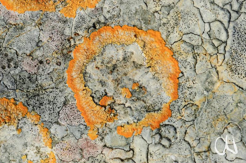 Flechten auf einem Fels, Sardinien
