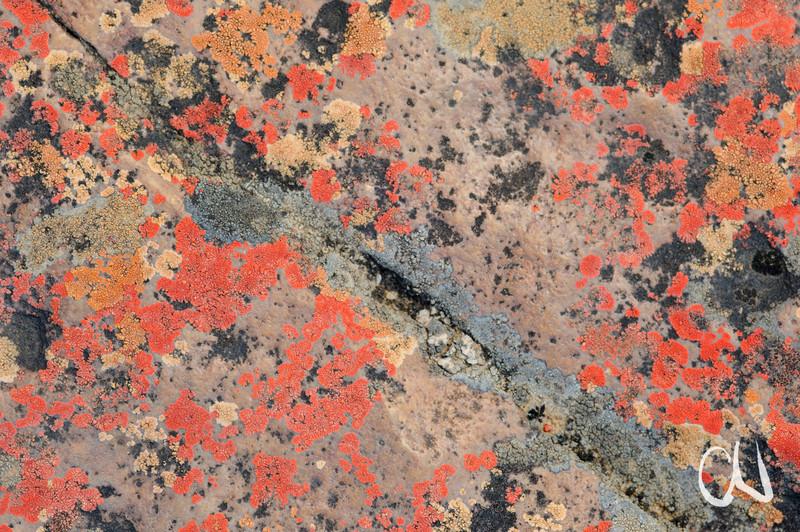 Flechten auf Fels, Rock Pools, Papkuilsfontein Guest Farm, Nieuwoudtville, Northern Cape, Nordkap, Südafrika, South Africa