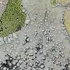 Flechten auf Fels, lichen on a rock, Island of Elba, Tuscany, Italy, Insel Elba, Toskana, Italien