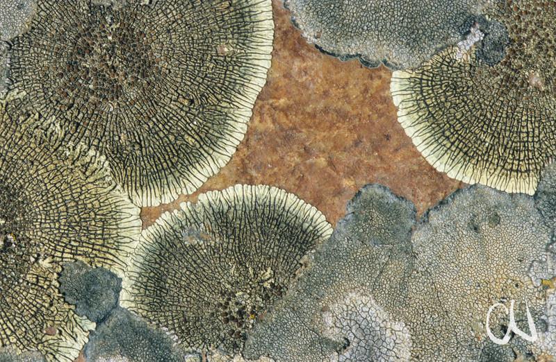 lichen on rock, Flechten auf Fels, Sierra de Hornachos, Estremadura, Extremadura, Spain, Spanien