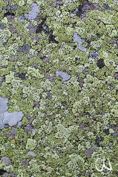lichen on rock, Flechten auf Fels, Allos, Mercantour-Nationalpark, Seealpen, Alpes-Maritimes, Frankreich, France