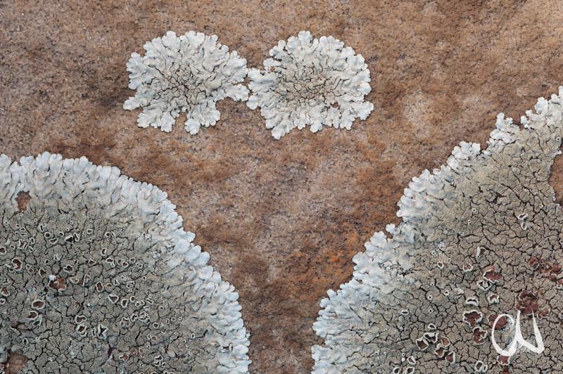 Flechten, Fels, National Botanical Garden Pretoria, Botanischer Garten, Pretoria, Südafrika, South Africa