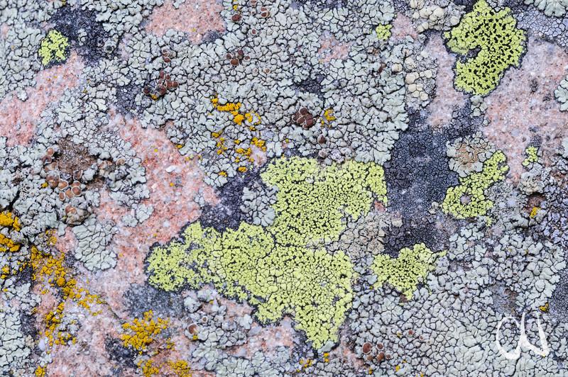 lichen on rock, Flechten auf Fels, Allos, Mercantour-Nationalpark, Seealpen, Alpes-Maritimes, Frankreich, France