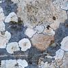 Flechten, Fels, Monte Labbro, Region Monte Amiata, südliche Toskana, Italien, Italy, Toskana, Italien, Tuscany, Italy