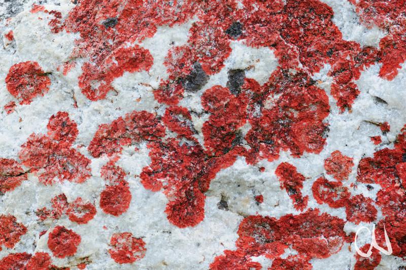 rote Flechten auf weißem Quarzgestein, Kogelberg Nature Reserve, Western Cape, Westkap, Südafrika, red lichenes on white rock, South Africa