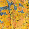 Flechten, Fels, Dwesa Nature Reserve, Eastern Cape, Wild Coast, Ostkap, Südafrika, South Africa.