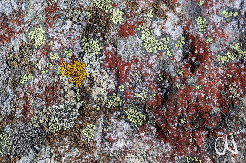 Flechten auf Fels, Feldberg, Schwarzwald, Deutschland, Black Forest, Germany