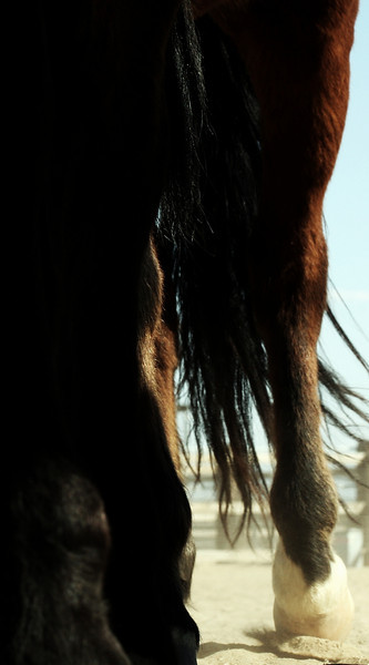Feathers<br /> Rachael Waller Photography 2009<br /> Wild horses