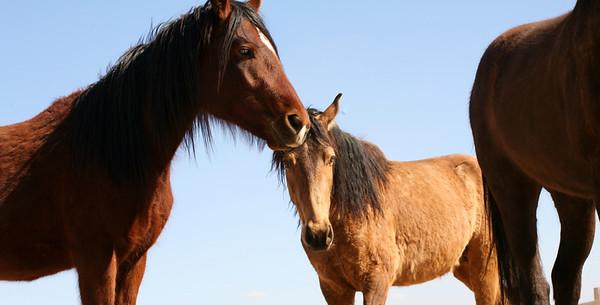 Los caballos del cielo X Rachael Waller Photography