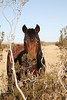 """""""Everything's gonna be alright now""""<br /> Rachael Waller Photography 2009<br /> Rescued wild horses"""