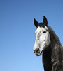 """""""Hermano del cielo"""" (brother of the sky) 2<br /> Rachael Waller Photography 2009<br /> Wild horses"""