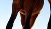 Los caballos del cielo V