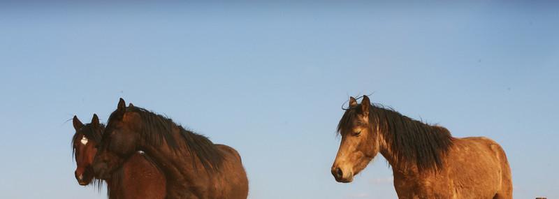 Los caballos del cielo VII Rachael Waller Photography