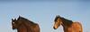 Los caballos del cielo VII<br /> Rachael Waller Photography