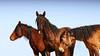 Los caballos del cielo  XII<br /> Rachael Waller Photography