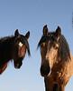 Los caballos del cielo VIII<br /> Rachael Waller Photography