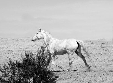 """Blanco y Negro""  Mustang Rachael Waller Photography 2009"