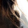 """Wimpy""<br /> Rachael Waller Photography 2009<br /> Jill Starr's sweet wild boy"