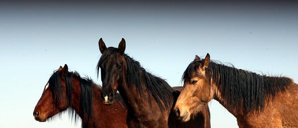 Los caballos del cielo IV
